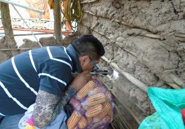Investigando estrategias de control de Chagas